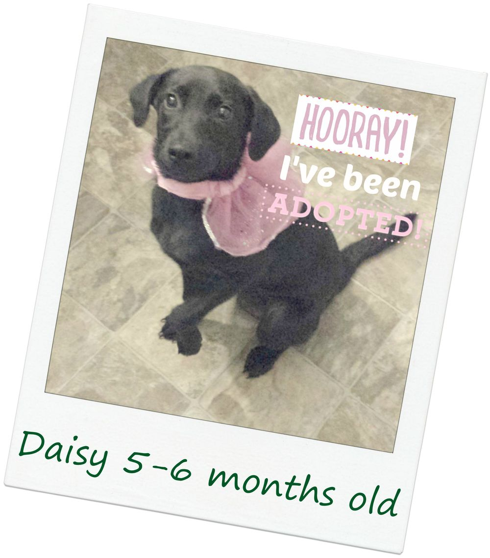 Daisy_adopt.jpg