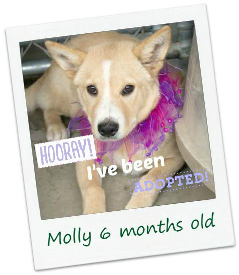 molly_adopted.jpg