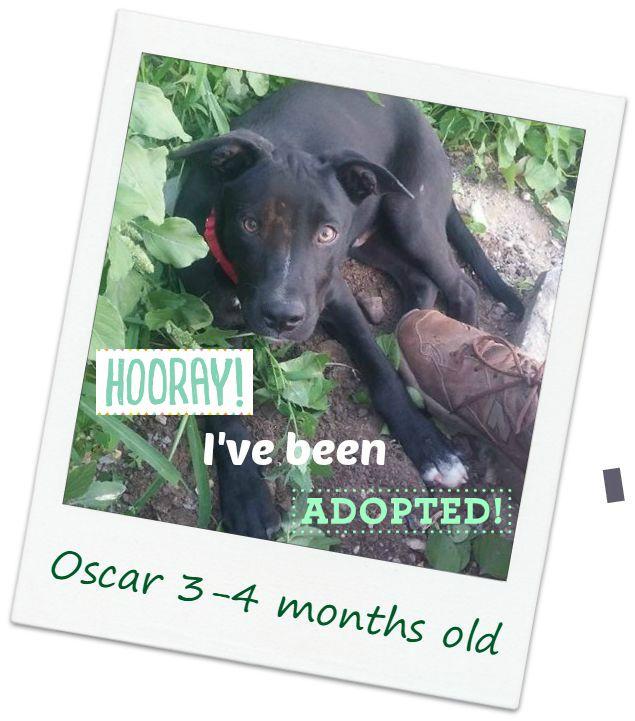 oscar_adopt.jpg