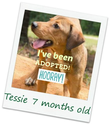 tessie_adopt.jpg
