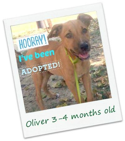 Oliver_adopt.jpg