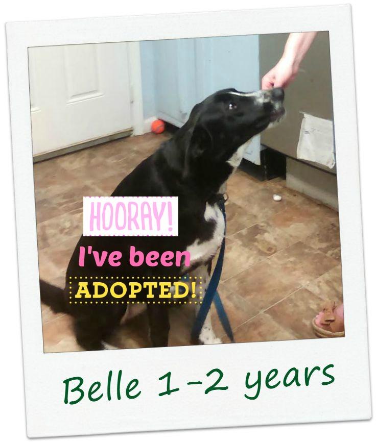 Belle_adopt.jpg