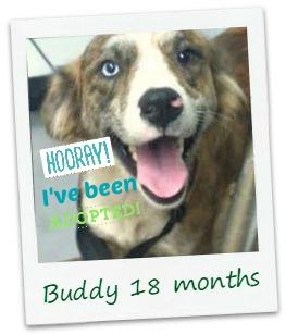 buddy_adopt.jpg