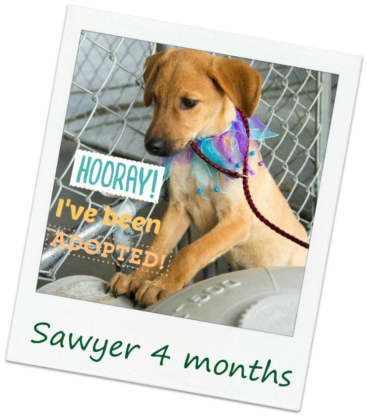 sawyer_adopt.jpg