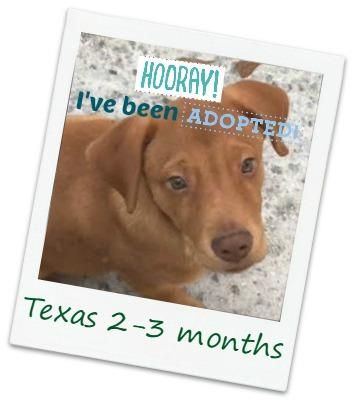 texas2_adopt.jpg