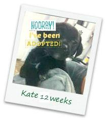 kate_adopt.jpg