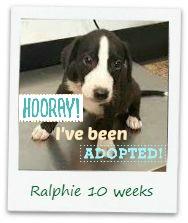 ralphie_adopt.jpg