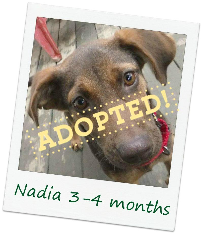 Nadia_adopt.jpg