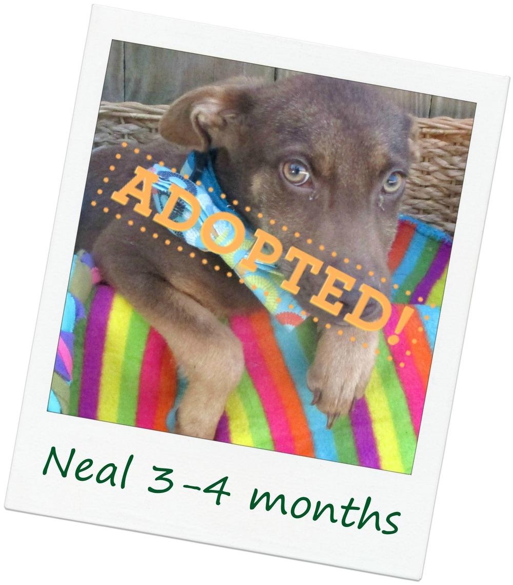 Neal_adopt.jpg