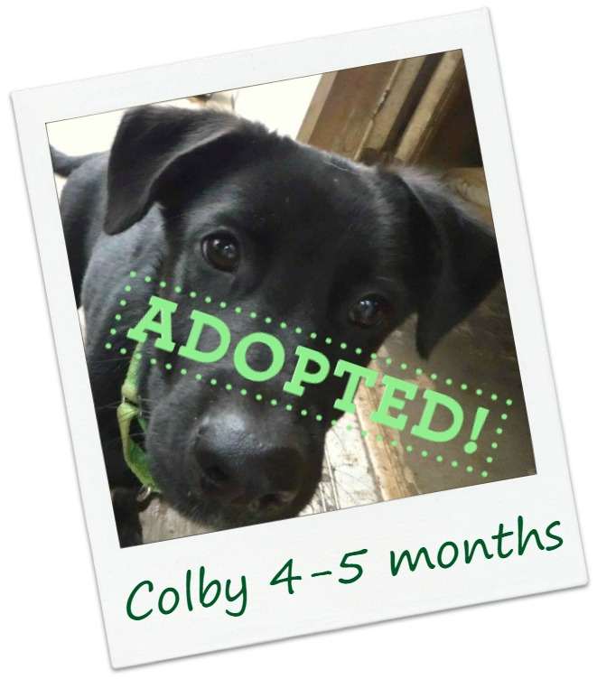 Colby_adopt.jpg