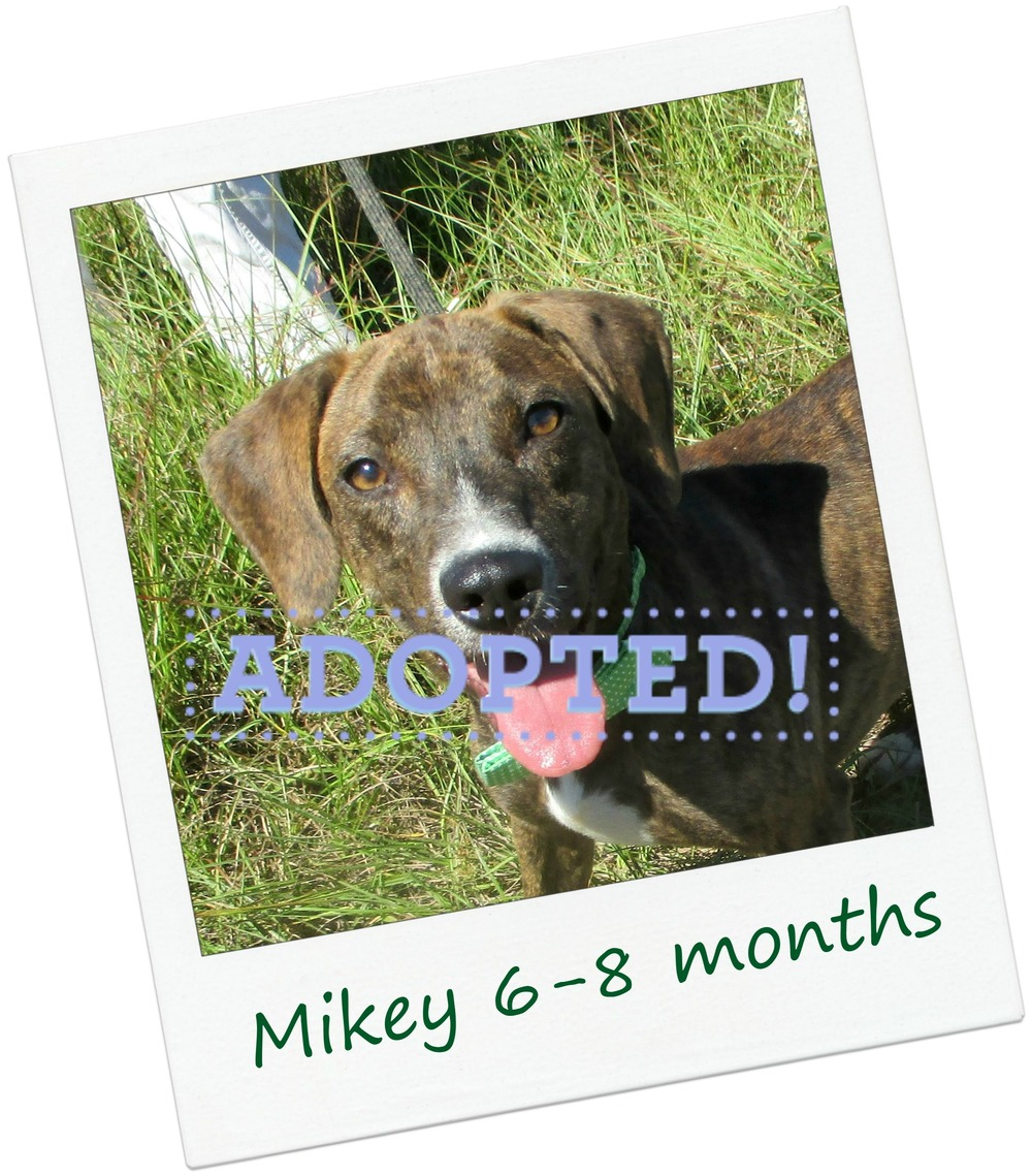 Mikey_adopt.jpg