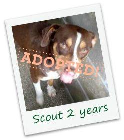 scout_adopt.jpg