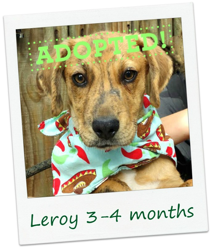 Leroy_adopted.jpg