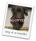 Ivey_adopted.jpg