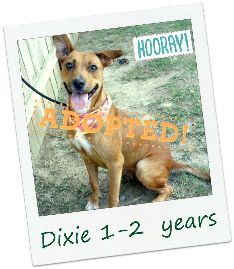 Dixie_adopt.jpg