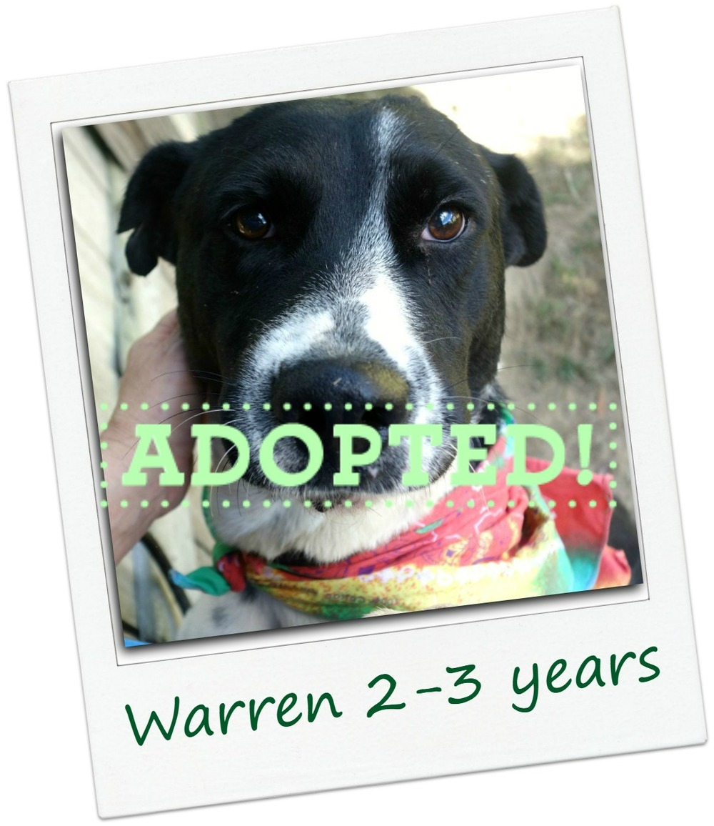 warren_adopted.jpg