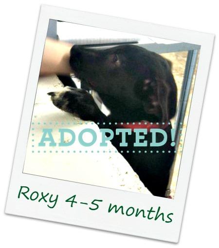 Roxy_adopted.jpg