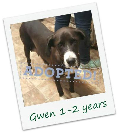 Gwen_adopted.jpg