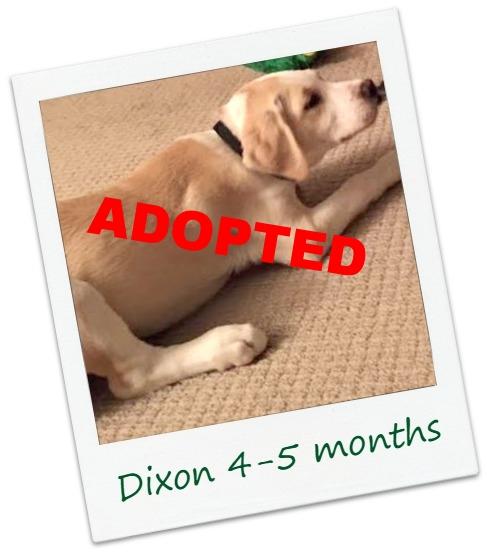 Dixon_cover5.jpg