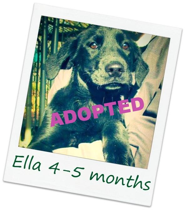 Ella2_cover.jpg