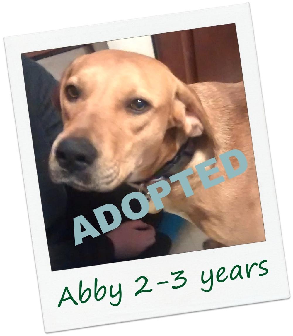 AbbyCover2.jpg