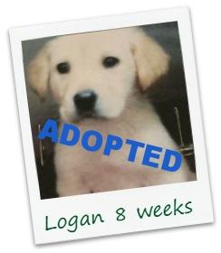 Logan_cover.jpg