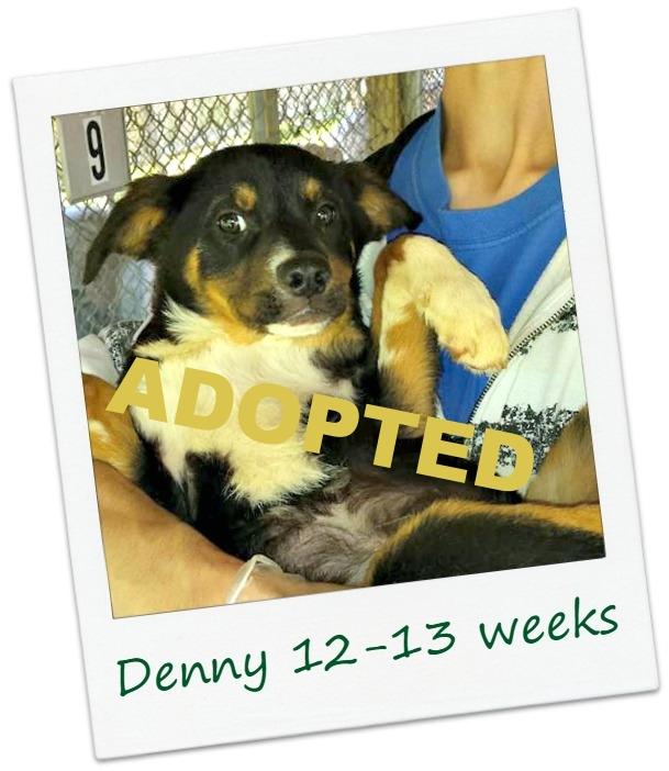 Denny_cover.jpg