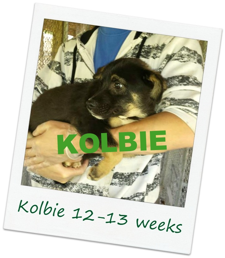 Kolbie_Cover.jpg