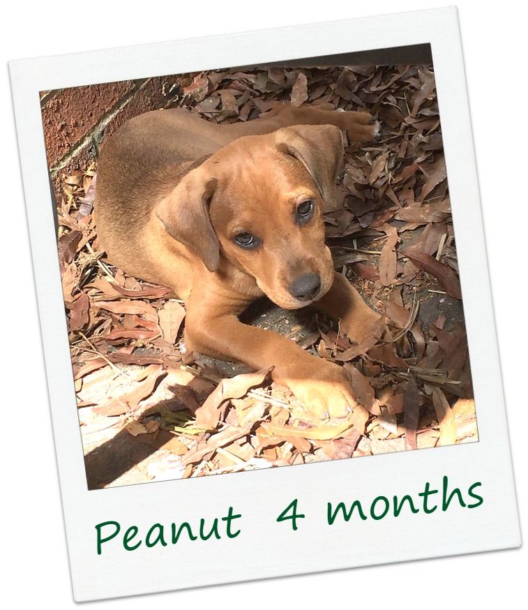 Peanut_Cover.jpg