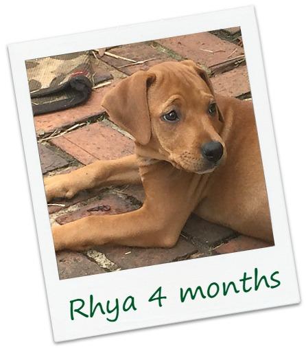 Rhya_Cover.jpg