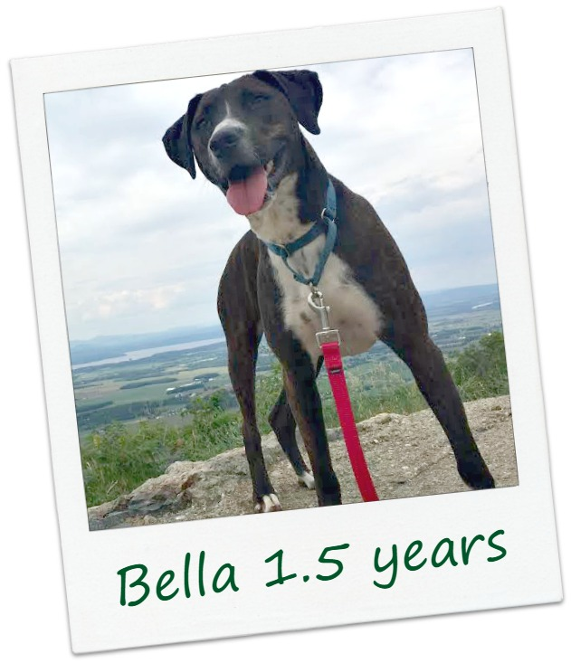 bella25_Cover.jpg
