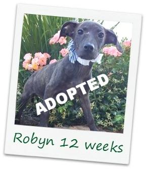 Robyn2_Cover.jpg