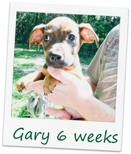 Gary_Cover.jpg
