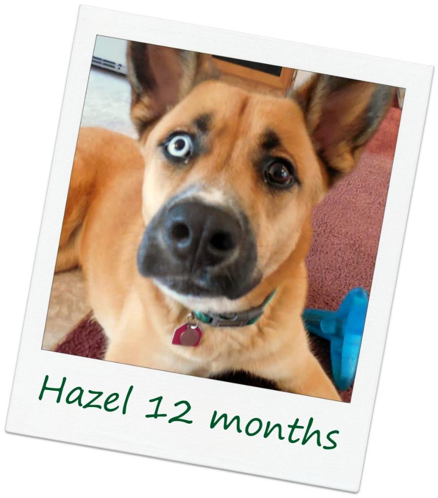 Hazel_Cover.jpg