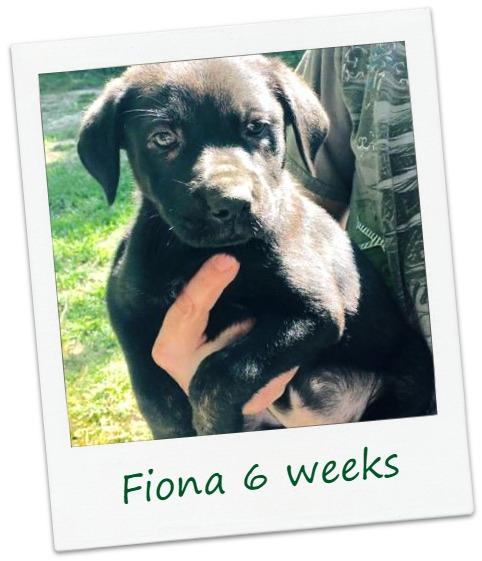 Fiona_cover.jpg