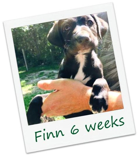 Finn_Cover.jpg