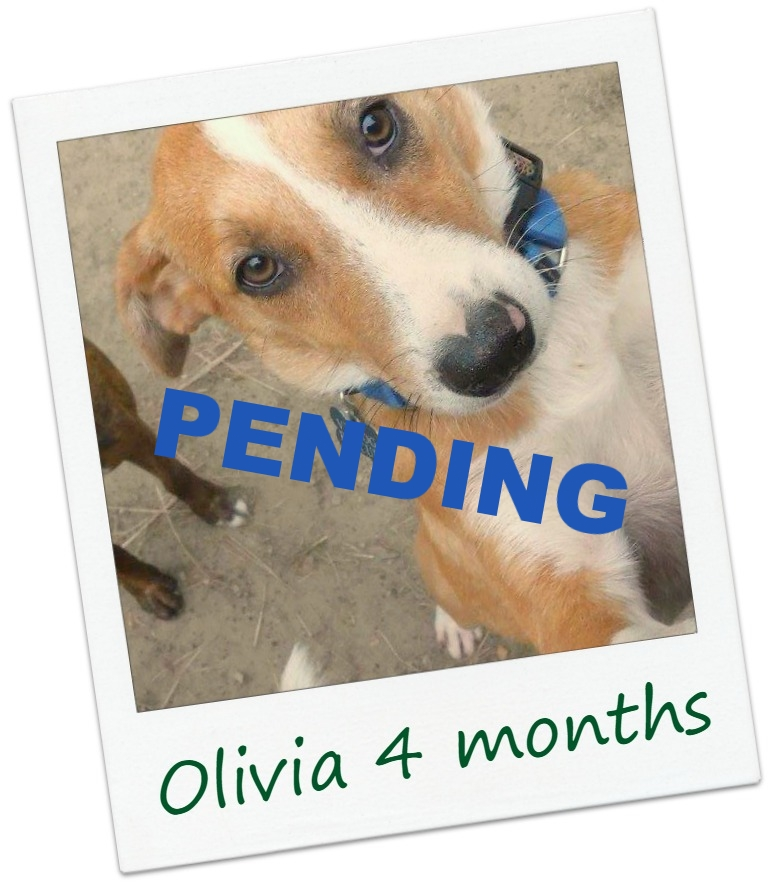OliviaF5BB_Cover.jpg