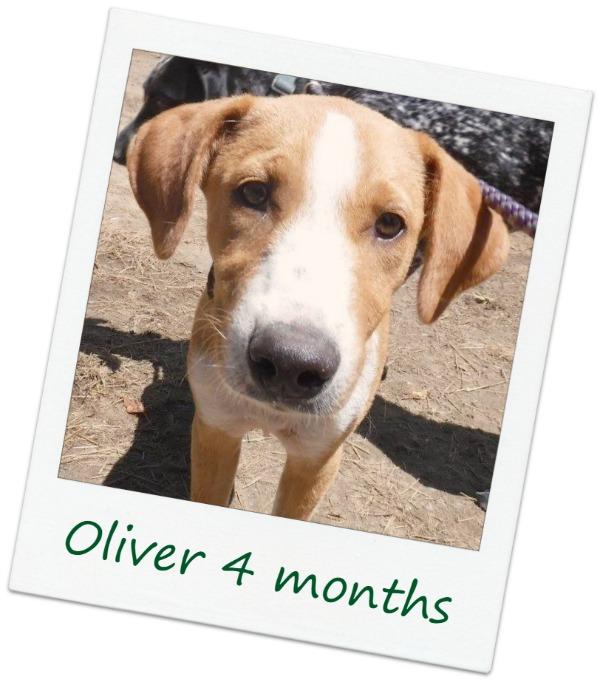 Oliver1_Cover.jpg