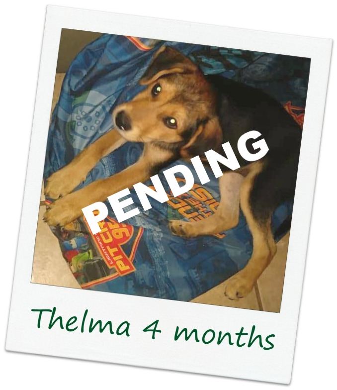 Thelma_Cover.jpg