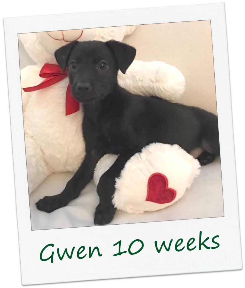 Gwen_Cover.jpg