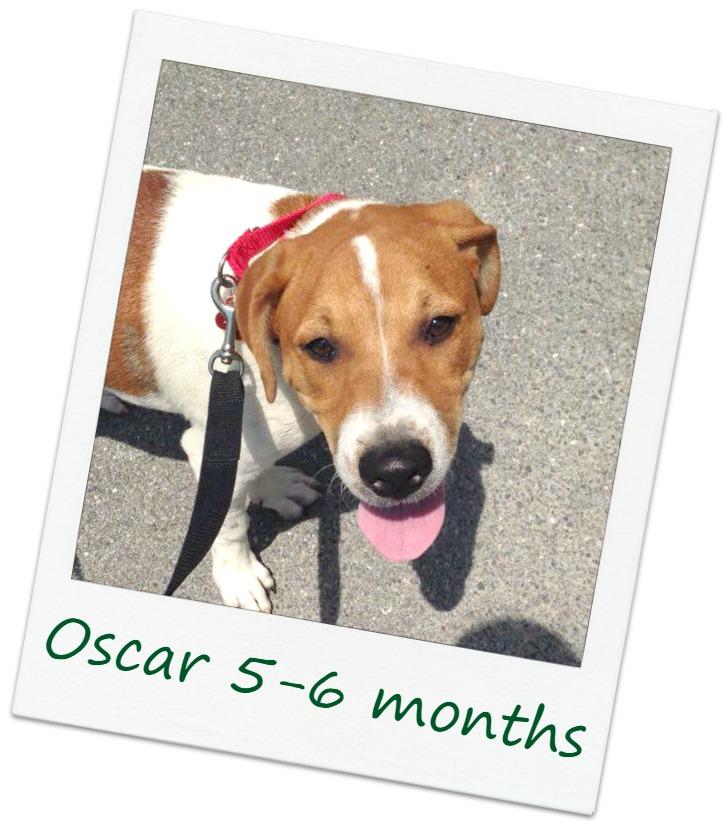 oscar_3cover.jpg
