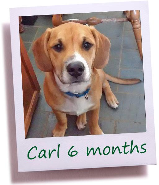 Carl4N_COver.png