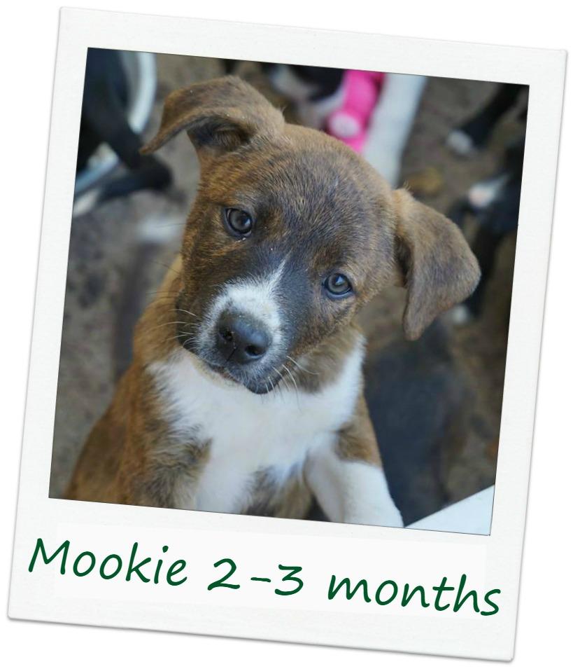 Mookie_Cover.jpg