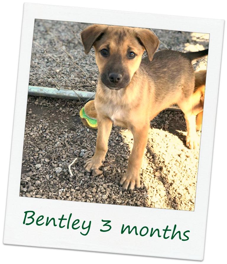 Bentley_COver.jpg