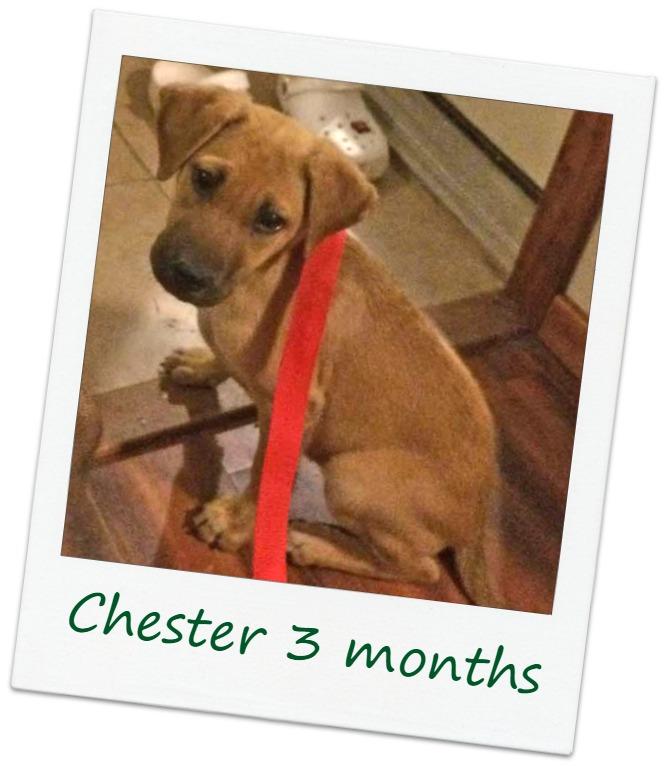 Chester2_Cover.jpg