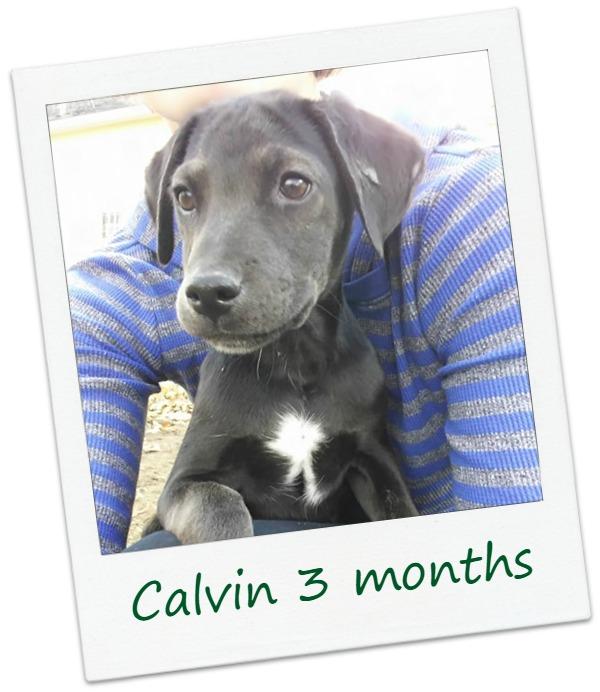 Calvin12_Cover.jpg