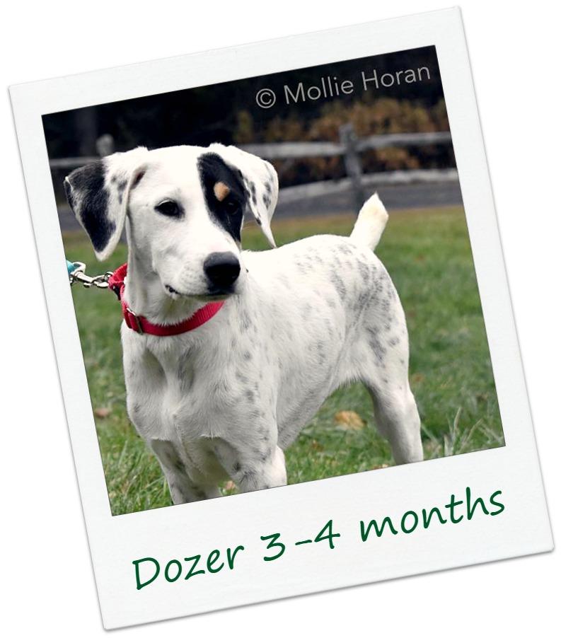 DozerF2_COver.jpg