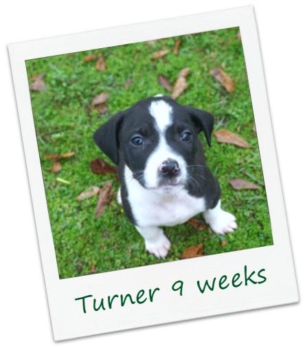 Turner_cover.jpg