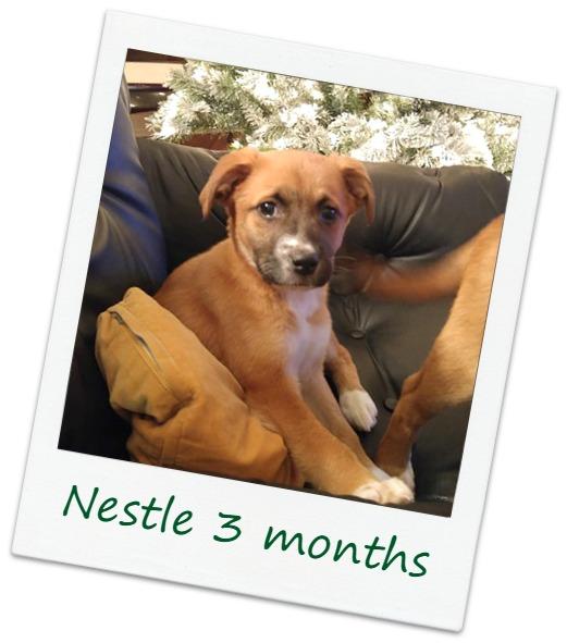 Nestle7_Cover.jpg