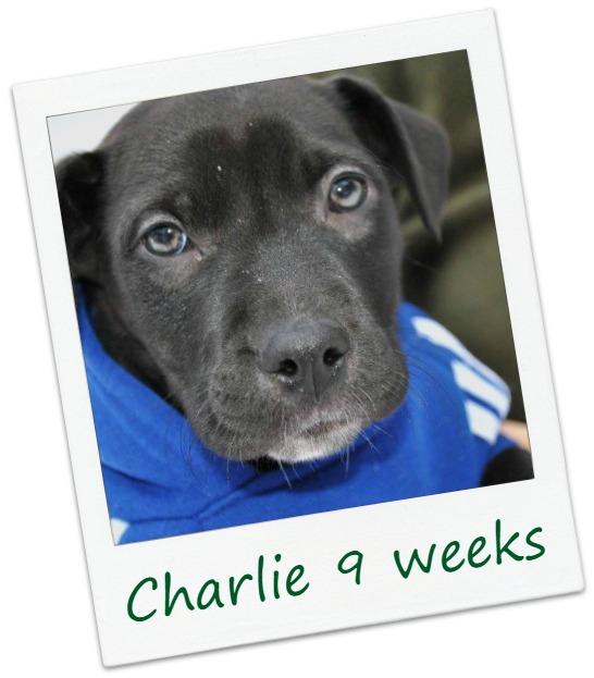 Charlie8_COver.jpg
